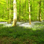 Forest of Dean 4